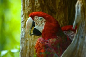 Percakapan Bahasa Inggris Menikmati Paket Zoo Admission