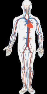 Kumpulan Kosakata Bahasa Inggris Mengenai Organ Dalam Tubuh Manusia Sederet Com